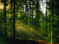 Best Forest landscape photography
